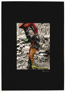 Kunstfotografie Weinrebe